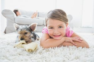 Use Pet Diapers Or Dry Powder To Remove Stains From Carpet
